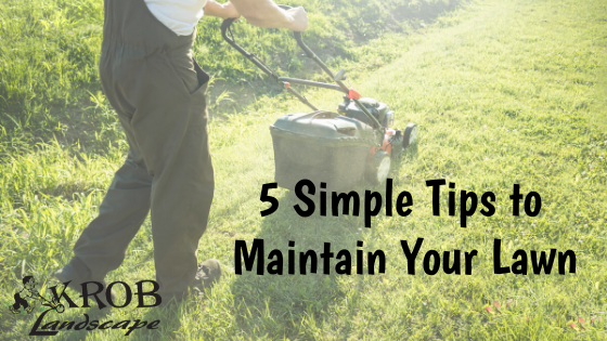 5 Simple Tips to Maintain Your Lawn