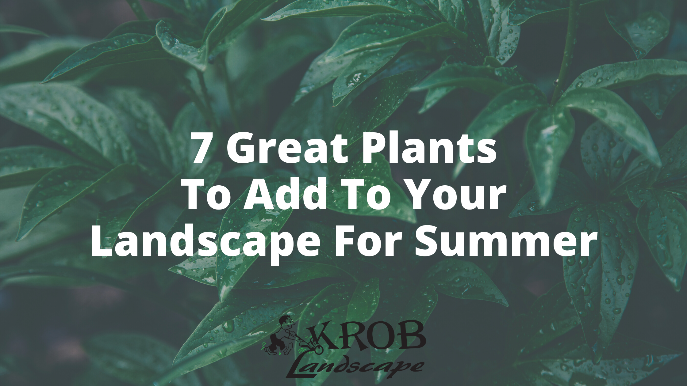 7 Great Plants To Add To Your Landscape For Summer.png