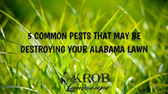 5 Common Pests That May Be Destroying Your Alabama Lawn